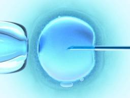 In- Vitro- Befruchtung