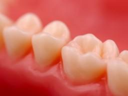 Zähne Detailansicht